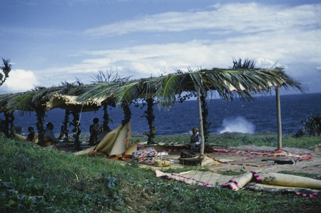 Natives preparing for a luau for the scientist of the Capricorn Expedition (1952-1953) on the island of Tongatabu in the K...