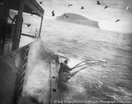 View from deck of fishermen landing tuna from side of boat, with sea birds flying above and island in background