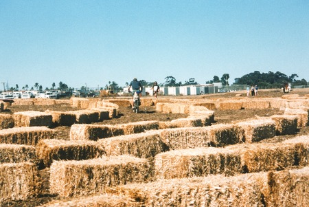 The Great Balboa Park Landfill Exposition of 1997: bales of hay