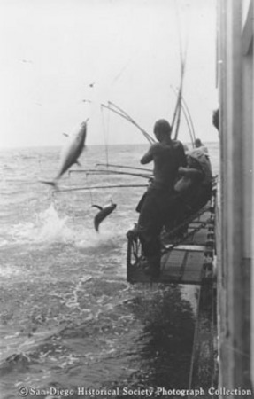 Fishermen landing tuna from metal racks on side of Chicken of the Sea