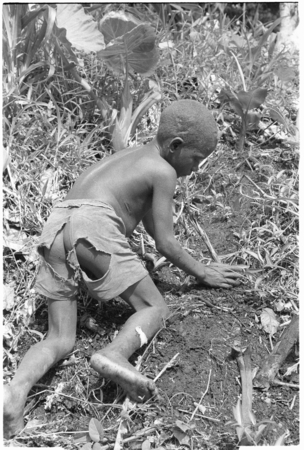Boy planting taro in garden