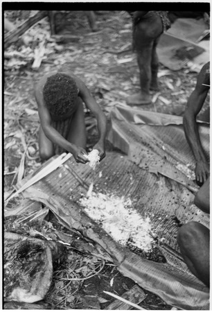 Pig festival, pig sacrifice, Tsembaga: child mixes pitpit and pig's blood on banana leaves for cooking ritual meal