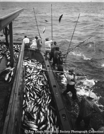 View looking astern of fishermen with bamboo poles and tuna piled on deck