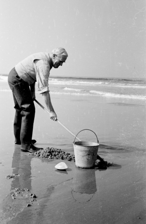 Wesley Roswell Coe (1869-1960) an invertebrate zoologist and marine biologist whose studies at ran the gamut, from investi...