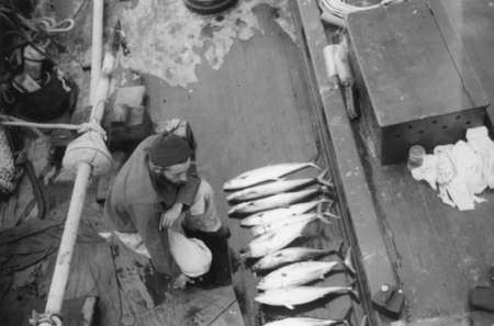 [Man with coring device and tuna aboard R/V E.W. Scripps]