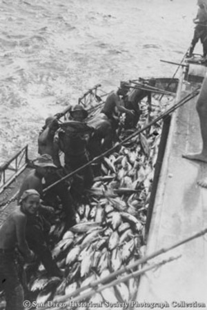Fishermen with full deck of tuna on Chicken of the Sea