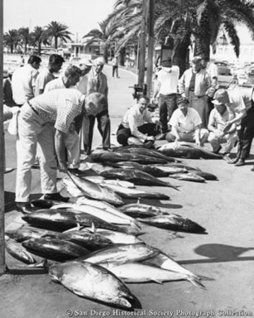 Group of men looking at catch of tuna laid out on sidewalk