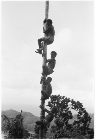 Four boys climb up a palm.