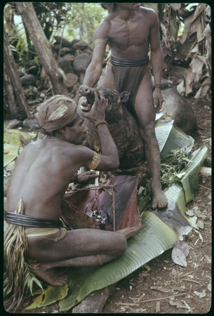 Food preparation: Pambo and Arate bleeding a pig at Nemengomp