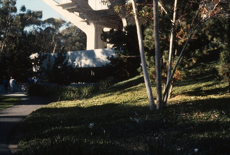 Trees: view of original site for the Silent Tree to the right of Geisel library entrance, before its installation; UCSD