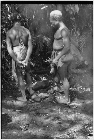 Pig festival, uprooting cordyline ritual, Tsembaga: luluai Yembs (r) and another man with female pig they have sacrified t...