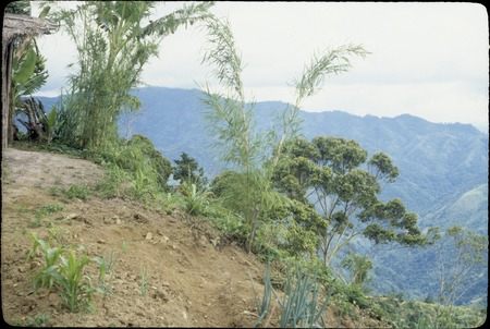 Jimi River area, panoramic view 02: garden and mountains