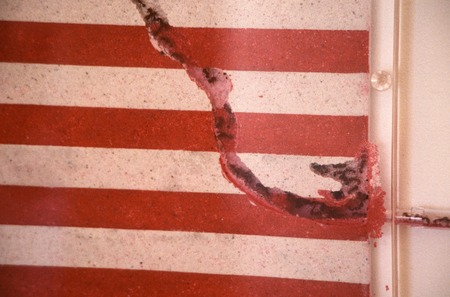 "America: detail of ants removing sand from U.S. ""flag"""