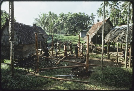 House-building: men construct frame, vertical poles are notched at top, betel nut palm (l) taboo with coconut frond tied a...