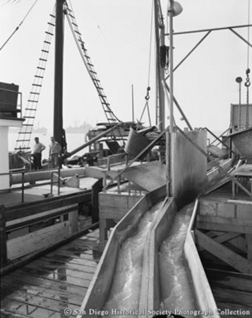 Unloading tuna boats at San Diego cannery