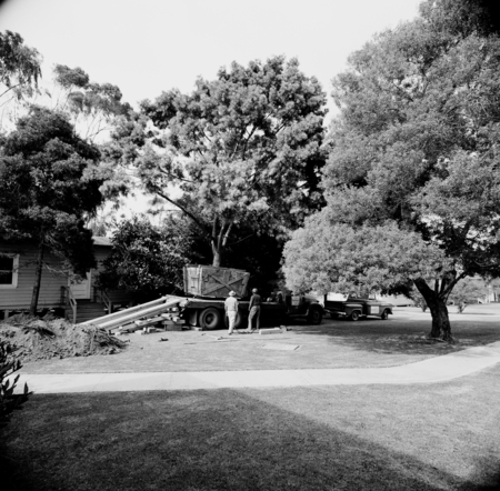 Boxed tree being position and made ready for planting on the UCSD campus. August 1965.