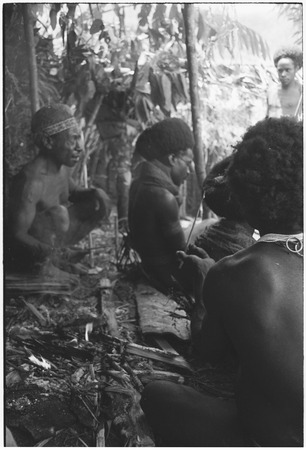 Pig festival, wig ritual, Tsembaga: man uses arrow point to apply sap to wig
