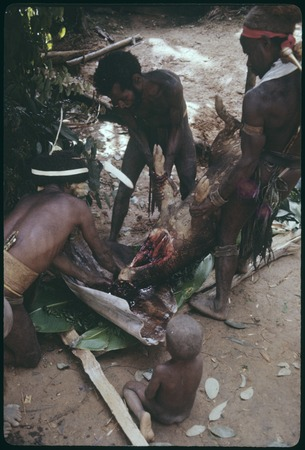 Pig festival, uprooting cordyline ritual, Tuguma: men collect blood from sacrificed pig