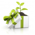 Plant growing in a gift box